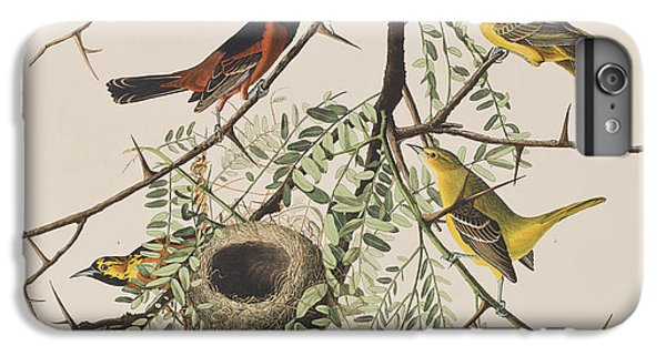 Orchard Oriole IPhone 6 Plus Case