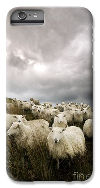 Sheep iPhone 6 Plus Case - Welsh Lamb by Angel Ciesniarska