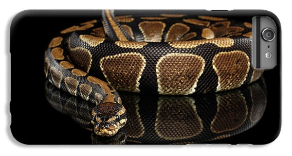 Ball Or Royal Python Snake On Isolated Black Background IPhone 6 Plus Case by Sergey Taran
