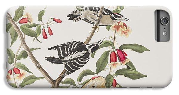 Downy Woodpecker IPhone 6 Plus Case