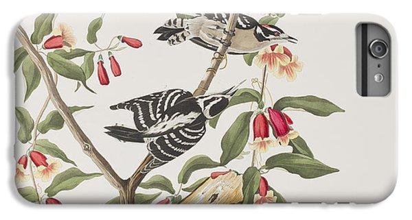 Downy Woodpecker IPhone 6 Plus Case by John James Audubon