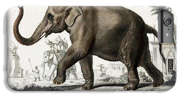Indian Elephant, Endangered Species IPhone 6 Plus Case
