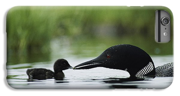 Loon iPhone 6 Plus Case - Loons by Michael S Quinton