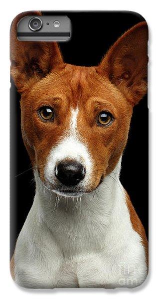 Pedigree White With Red Basenji Dog On Isolated Black Background IPhone 6 Plus Case by Sergey Taran