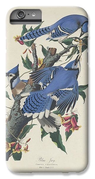 Bluejay iPhone 6 Plus Case - Blue Jay by Dreyer Wildlife Print Collections