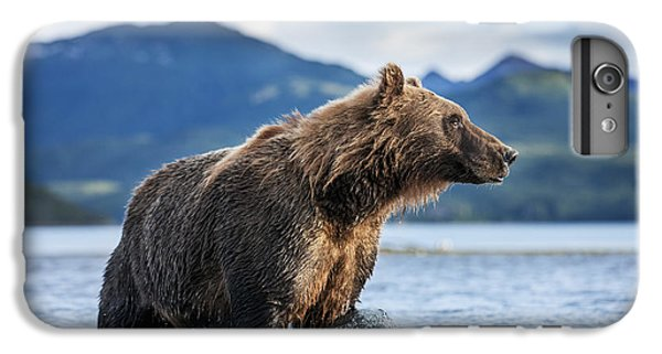 Coastal Brown Bear  Ursus Arctos IPhone 6 Plus Case by Paul Souders