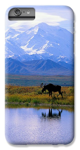 Wildlife iPhone 6 Plus Case - Denali National Park by John Hyde - Printscapes