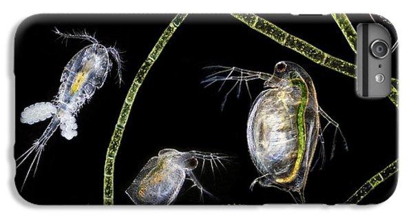 Pond Life IPhone 6 Plus Case