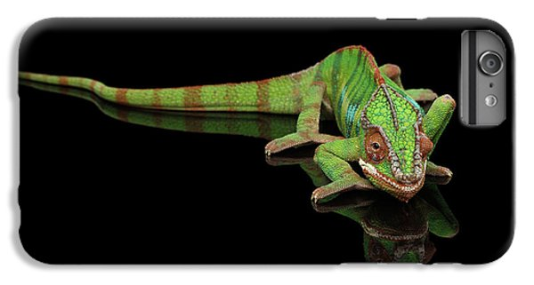Sneaking Panther Chameleon, Reptile With Colorful Body On Black Mirror, Isolated Background IPhone 6 Plus Case by Sergey Taran