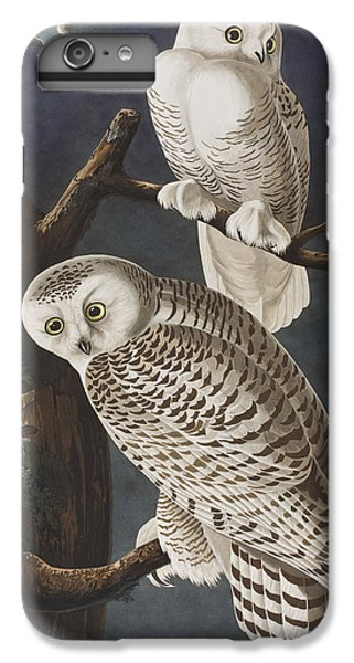 Owl iPhone 6 Plus Case - Snowy Owl by John James Audubon