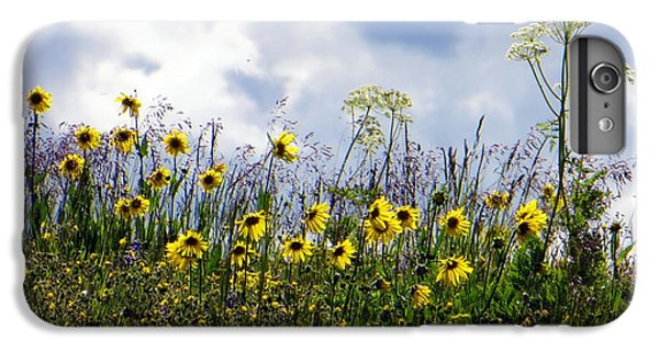 A Daisy Day IPhone 6 Plus Case by Karen Shackles