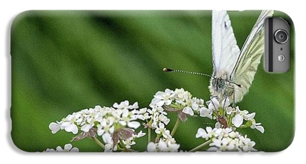 A Green-veined White (pieris Napi) IPhone 6 Plus Case