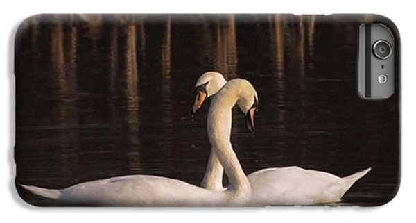 iPhone 6 Plus Case - A Painting Of A Pair Of Mute Swans by John Edwards