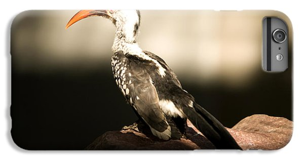 A Red-billed Hornbill At The Lincoln IPhone 6 Plus Case