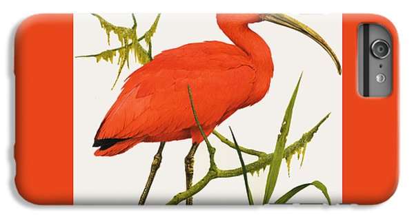 A Scarlet Ibis From South America IPhone 6 Plus Case by Kenneth Lilly