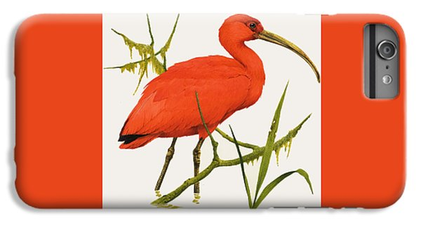 A Scarlet Ibis From South America IPhone 6 Plus Case