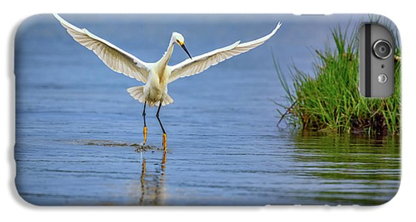 A Snowy Egret Dip-fishing IPhone 6 Plus Case by Rick Berk