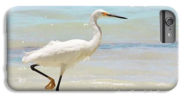 A Snowy Egret (egretta Thula) At Mahoe IPhone 6 Plus Case