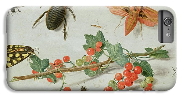 Magpies iPhone 6 Plus Case - A Sprig Of Redcurrants With An Elephant Hawk Moth, A Magpie Moth And Other Insects, 1657 by Jan Van Kessel