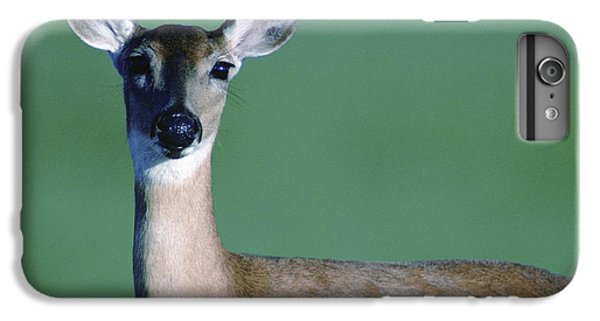 A White-tailed Deer On The Prairie IPhone 6 Plus Case