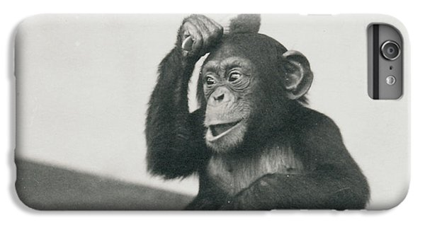 A Young Chimpanzee Playing With A Brush IPhone 6 Plus Case