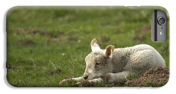 Sheep iPhone 6 Plus Case - Afternoon Nap by Angel Ciesniarska