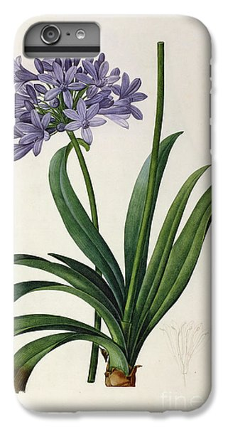 Lily iPhone 6 Plus Case - Agapanthus Umbrellatus by Pierre Redoute