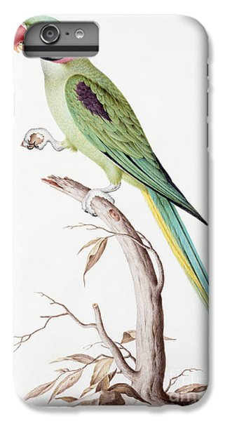 Alexandrine Parakeet IPhone 6 Plus Case