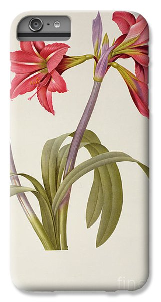 Nature iPhone 6 Plus Case - Amaryllis Brasiliensis by Pierre Redoute