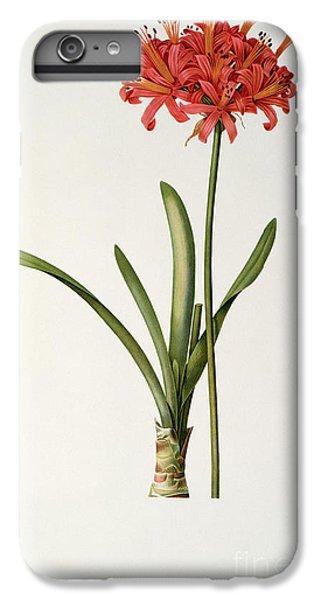 Amaryllis Curvifolia IPhone 6 Plus Case
