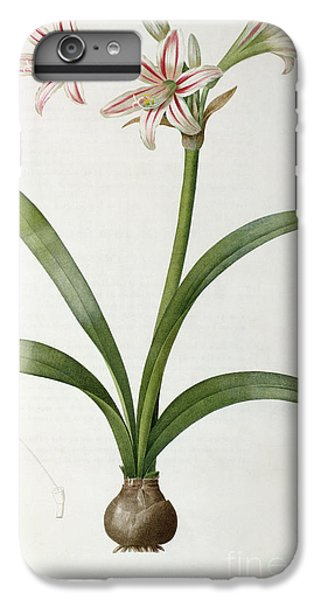 Amaryllis Vittata IPhone 6 Plus Case by Pierre Redoute