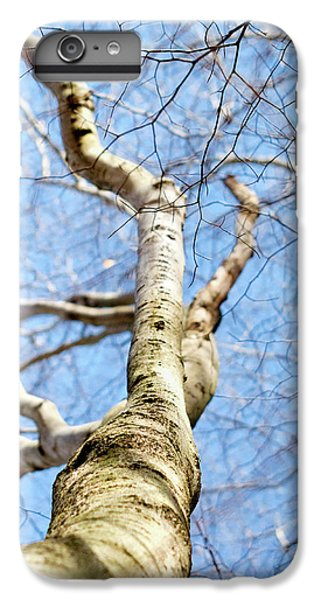 IPhone 6 Plus Case featuring the photograph American Beech Tree by Christina Rollo