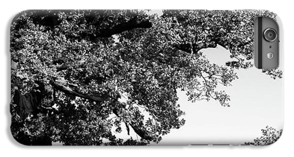 Ancient Oak, Bradgate Park IPhone 6 Plus Case