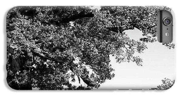 iPhone 6 Plus Case - Ancient Oak, Bradgate Park by John Edwards