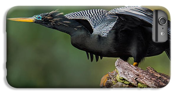 Anhinga Anhinga Anhinga, Costa Rica IPhone 6 Plus Case by Panoramic Images
