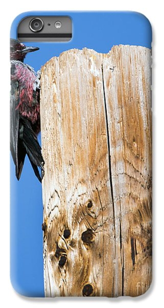 Any Tree Will Do IPhone 6 Plus Case by Mike Dawson