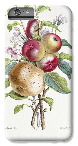 Apple Tree IPhone 6 Plus Case by JB Pointel du Portail