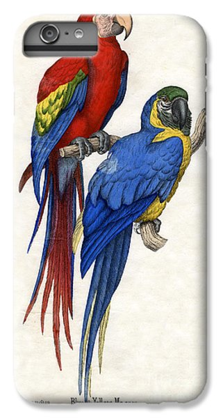Aracangua And Blue And Yellow Macaw IPhone 6 Plus Case