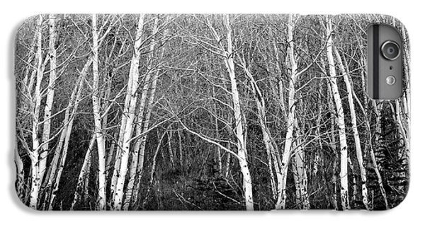 Aspen Forest Black And White Print IPhone 6 Plus Case