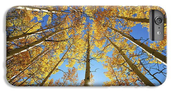 Aspen Tree Canopy 2 IPhone 6 Plus Case by Ron Dahlquist - Printscapes