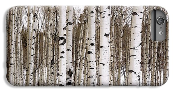 Nature iPhone 6 Plus Case - Aspens In Winter Panorama - Colorado by Brian Harig