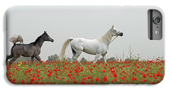 At The Poppies' Field... IPhone 6 Plus Case