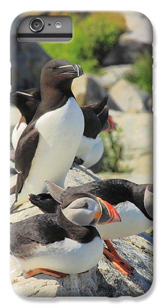 Atlantic Puffins And Razorbill IPhone 6 Plus Case by John Burk