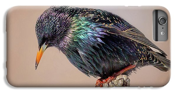 Backyard Birds European Starling Square IPhone 6 Plus Case by Bill Wakeley
