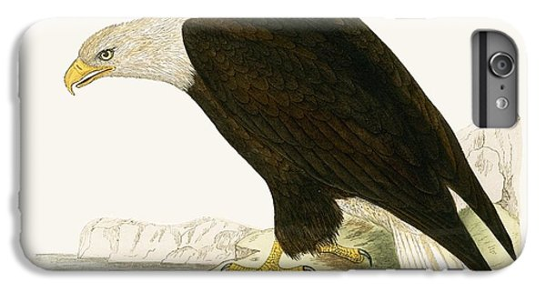 Bald Eagle IPhone 6 Plus Case by English School