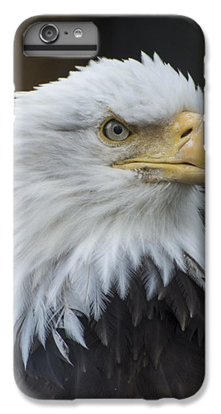 Bald Eagle Portrait IPhone 6 Plus Case