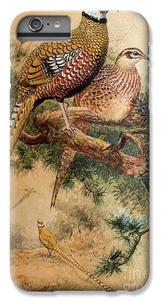 Bar-tailed Pheasant IPhone 6 Plus Case by Joseph Wolf