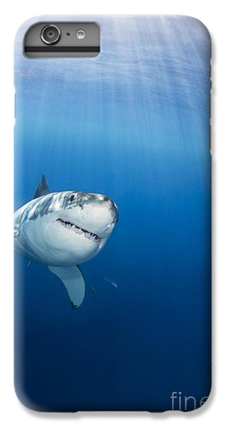 Sharks iPhone 6 Plus Case - Beautiful Great White by Dave Fleetham - Printscapes