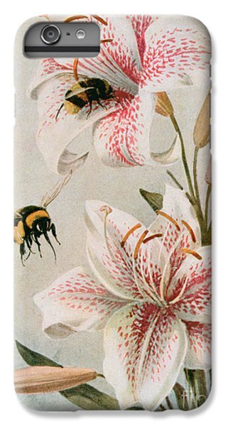 Honeybee iPhone 6 Plus Case - Bees And Lilies by Louis Fairfax Muckley