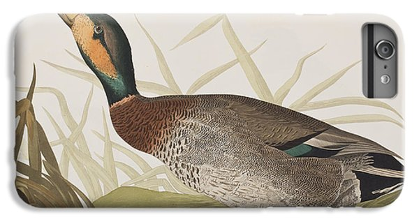 Bemaculated Duck IPhone 6 Plus Case by John James Audubon